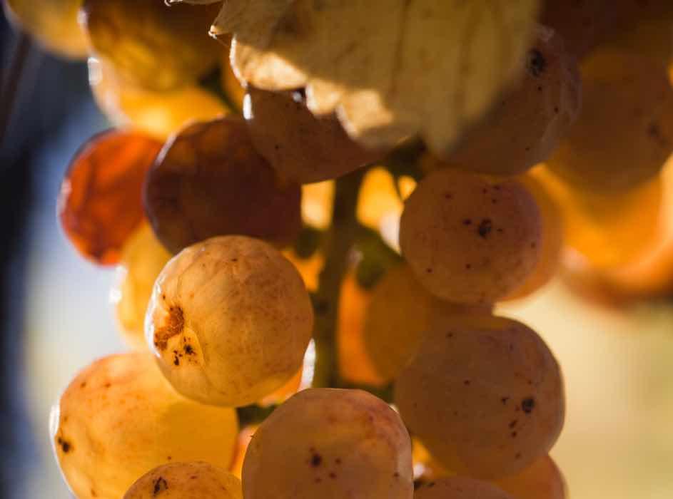 l'expression exacte d'un terroir avec un raisin arrivé à maturité