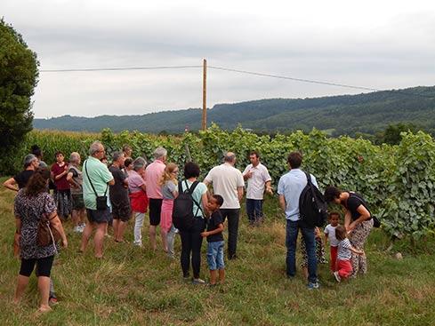 Un apéro vigneron bio où l'on découvre les parcelles de vignes