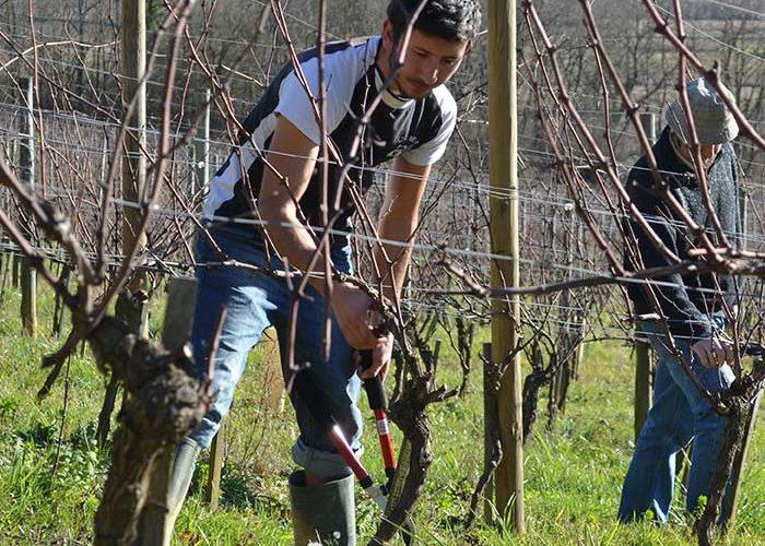Votre séjour en Madiran va vous familiariser avec les travaux à la vigne du Clos Basté