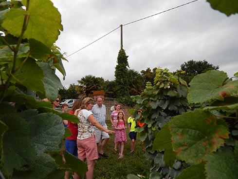 apéro vigneron bio où les visiteurs découvrent les vignes
