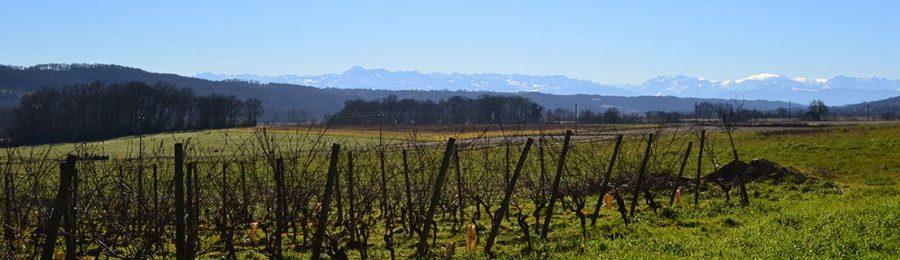 Les vignes du Clos Basté Face aux Pyrénées